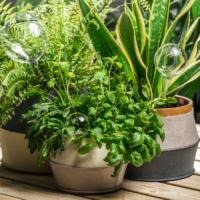 GREENERY taimede niisutuspall läbipaistev 33 cm